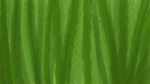 010_012-tallgrass