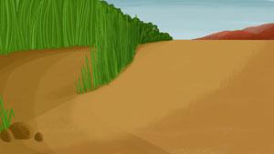 036-grass-desert2